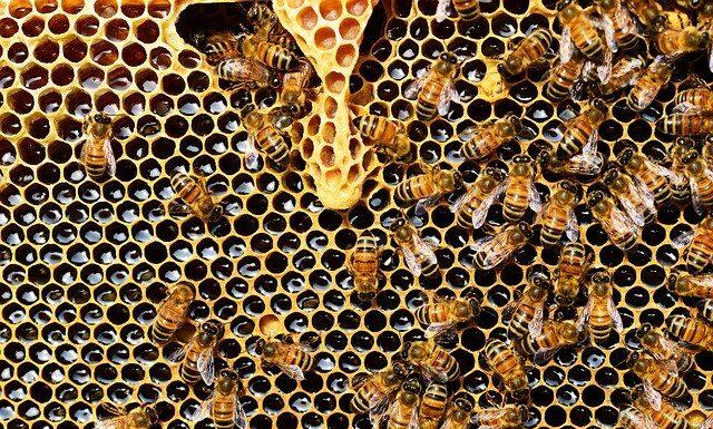 Pszczoły na ratunek